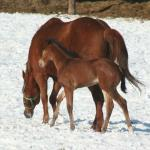 Ginger and her 2013 Filly