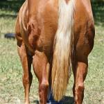 Pic is LOOKIN FOR KISSES - 2012 (NH) Palomino Filly by Kidslookintouchable x Playgirls Ms Behavin>  Seeing is believing...This mare is a PRODUCER!